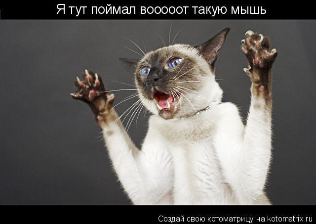 Котоматрица: Я тут поймал вооооот такую мышь