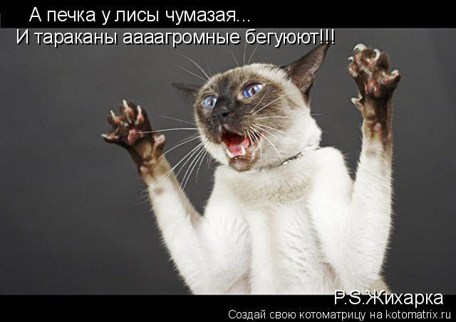 Котоматрица: А печка у лисы чумазая... И тараканы аааагромные бегуюют!!! P.S.Жихарка