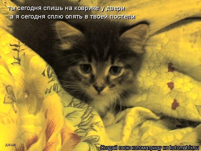 Котоматрица: ты сегодня спишь на коврике у двери  а я сегодня сплю опять в твоей постели   даша