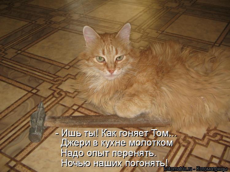 Котоматрица: - Ишь ты! Как гоняет Том... Джери в кухне молотком Надо опыт перенять. Ночью наших погонять!