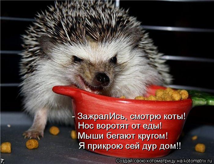 Котоматрица: - ЗажралИсь, смотрю коты! Нос воротят от еды! Мыши бегают кругом! Я прикрою сей дур дом!!