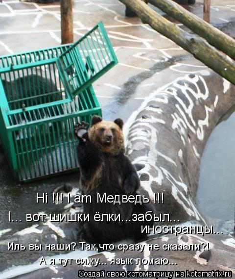 Котоматрица: Hi !!! I am Медведь !!! I... вот шишки ёлки...забыл... иностранцы... Иль вы наши? Так,что сразу не сказали?! А я тут сижу... язык ломаю...