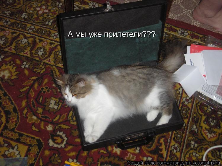 Котоматрица: А мы уже прилетели???