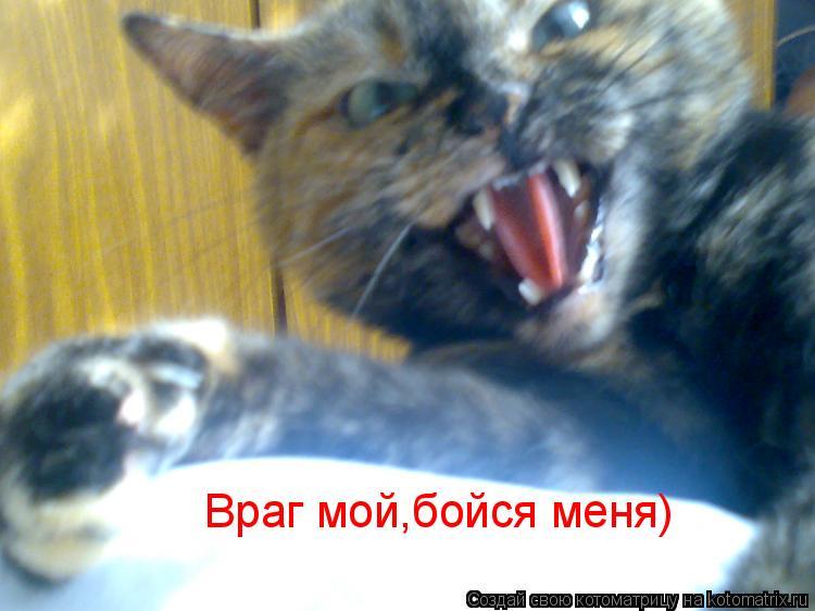Котоматрица: Враг мой,бойся меня)