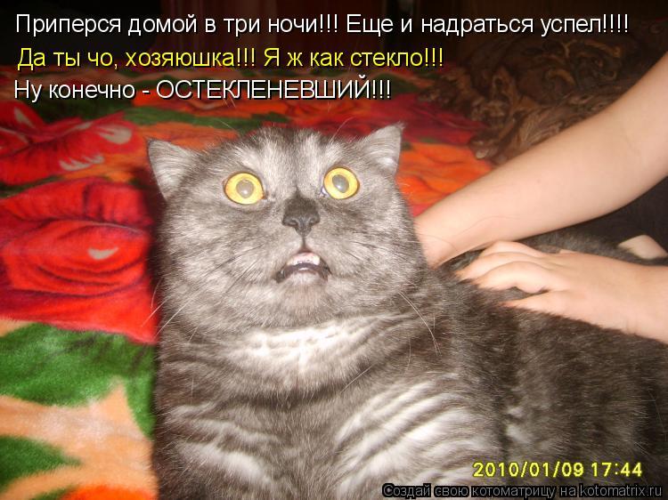 Котоматрица: Приперся домой в три ночи!!! Еще и надраться успел!!!! Да ты чо, хозяюшка!!! Я ж как стекло!!! Ну конечно - ОСТЕКЛЕНЕВШИЙ!!!