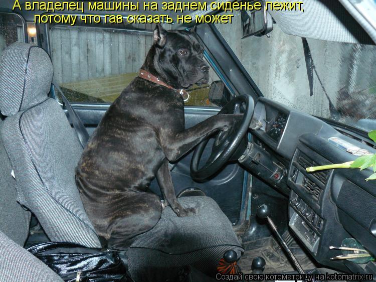 Котоматрица: А владелец машины на заднем сиденье лежит, потому что гав сказать не может