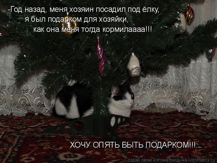 Котоматрица: -Год назад, меня хозяин посадил под ёлку, я был подарком для хозяйки, как она меня тогда кормилаааа!!! ХОЧУ ОПЯТЬ БЫТЬ ПОДАРКОМ!!!...