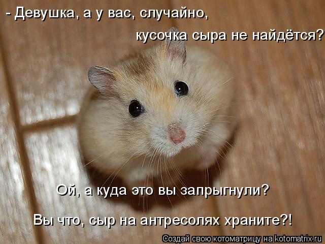 - Девушка, а у вас, случайно, кусочка сыра не найдётся? Ой, а куда эт