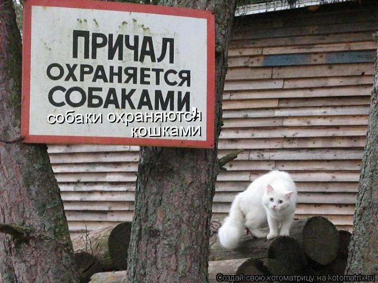 Котоматрица: собаки охраняются кошками ,