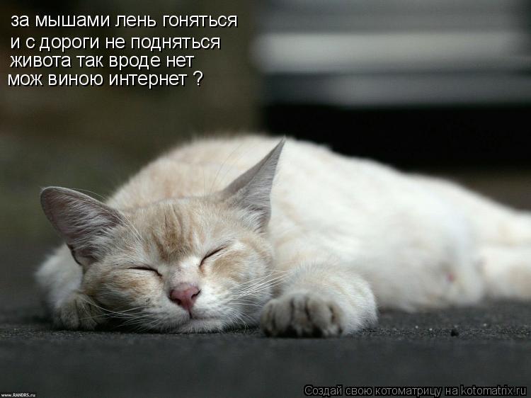 Котоматрица: за мышами лень гоняться  и с дороги не подняться живота так вроде нет  мож виною интернет ?