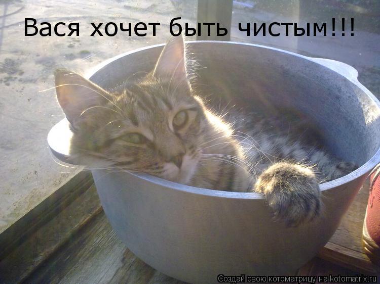Котоматрица: Вася хочет быть чистым!!!