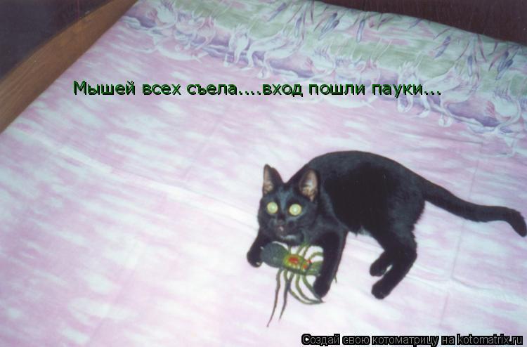 Котоматрица: Мышей всех съела....вход пошли пауки...