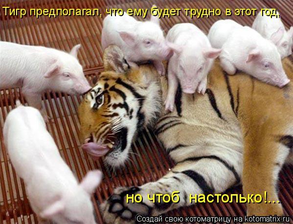 Котоматрица: Тигр предполагал, что ему будет трудно в этот год, но чтоб  настолько!...