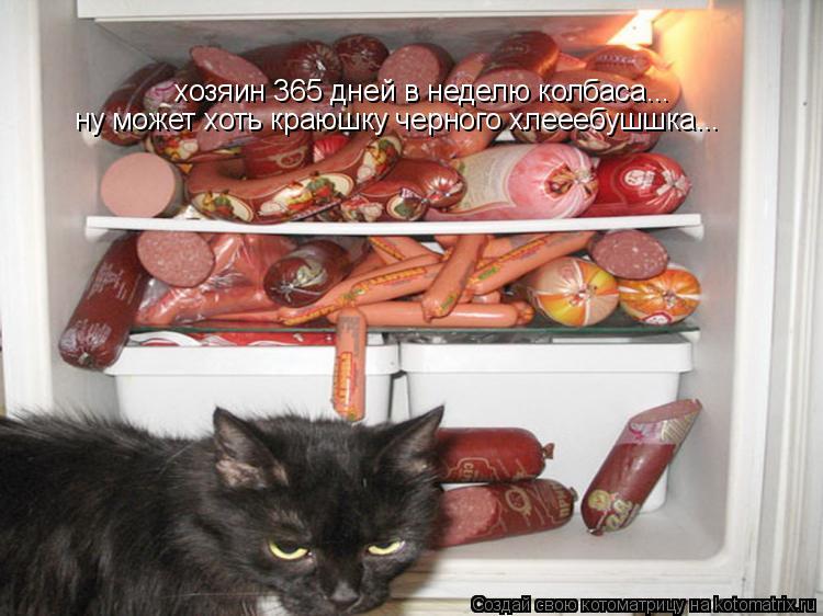 Котоматрица: хозяин 365 дней в неделю колбаса... ну может хоть краюшку черного хлееебушшка...