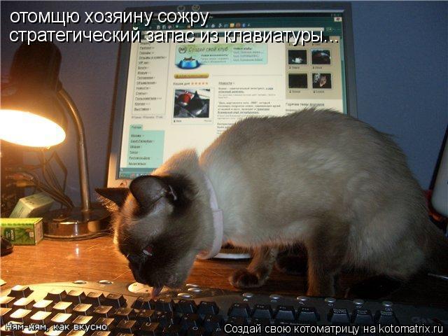 Котоматрица: отомщю хозяину сожру  стратегический запас из клавиатуры...