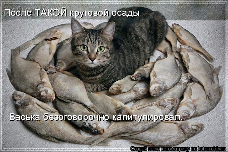 Котоматрица: После ТАКОЙ круговой осады Васька безоговорочно капитулировал.