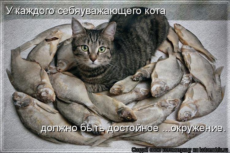 Котоматрица: У каждого себяуважающего кота должно быть достойное ...окружение.