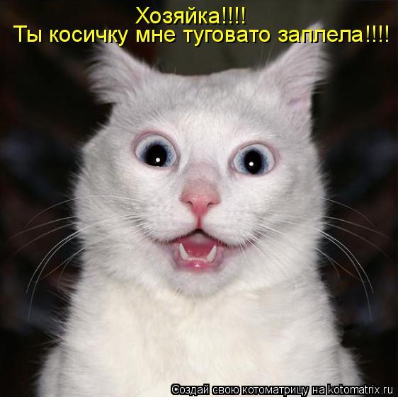 Котоматрица: Ты косичку мне туговато заплела!!!! Хозяйка!!!!