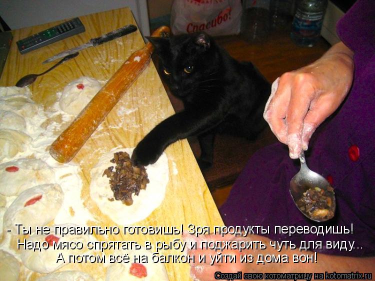 Котоматрица: - Ты не правильно готовишь! Зря продукты переводишь! Надо мясо спрятать в рыбу и поджарить чуть для виду... А потом всё на балкон и уйти из дом