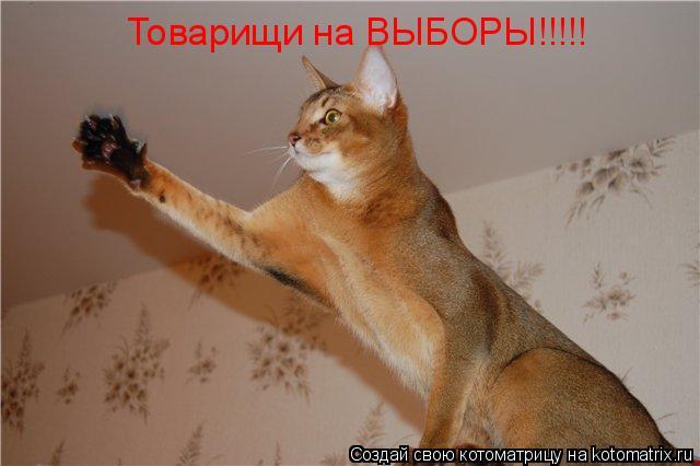 Котоматрица: Товарищи на ВЫБОРЫ!!!!!