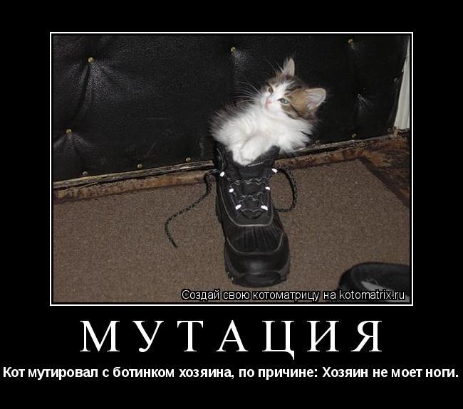 Котоматрица: Мутация Кот мутировал с ботинком хозяина, по причине: Хозяин не моет ноги.