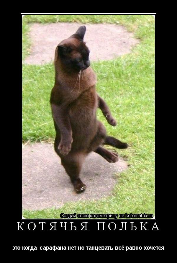 Котоматрица: Котячья полька это когда  сарафана нет но танцевать всё равно хочется