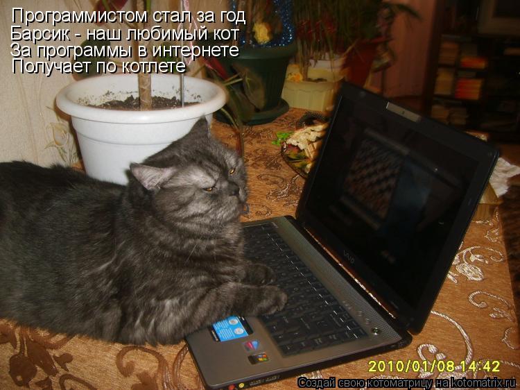 Котоматрица: Программистом стал за год Барсик - наш любимый кот За программы в интернете Получает по котлете