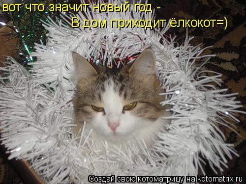 Котоматрица: вот что значит новый год - В дом приходит ёлкокот=)