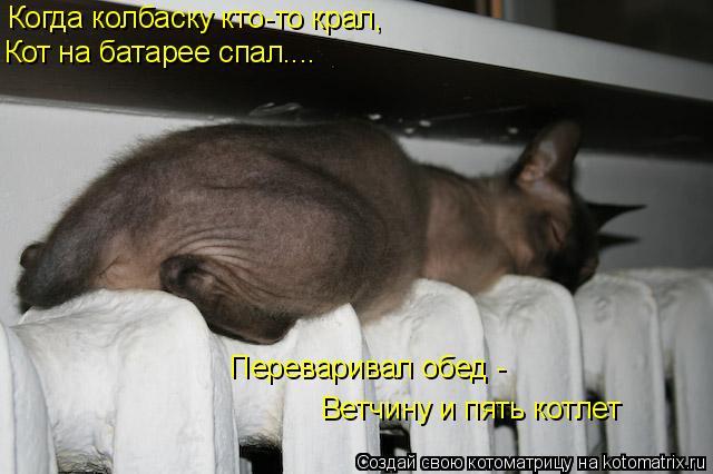 Котоматрица: Когда колбаску кто-то крал, Кот на батарее спал.... Переваривал обед - Ветчину и пять котлет
