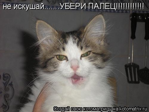 Котоматрица: не искушай.......УБЕРИ ПАЛЕЦ!!!!!!!!!!!!