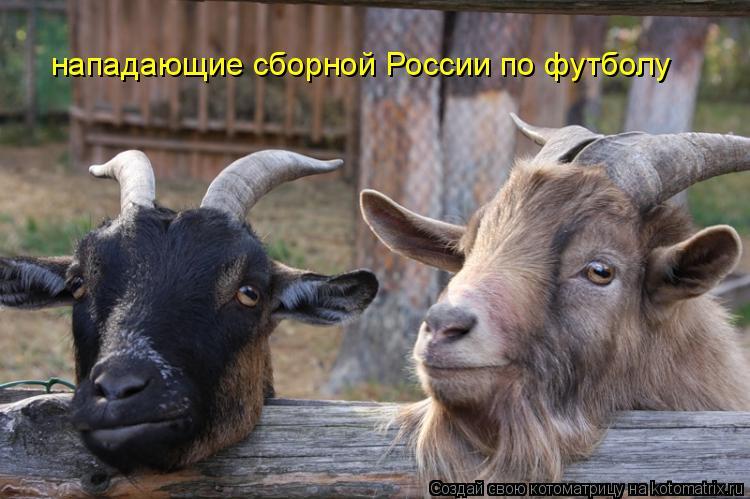 Котоматрица: нападающие сборной России по футболу