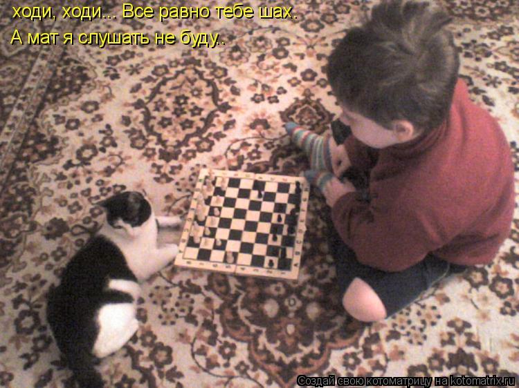 Котоматрица: ходи, ходи... Все равно тебе шах.  А мат я слушать не буду..