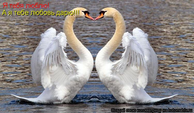 Котоматрица: Я тебя люблю! А я тебе любовь дарю!!!