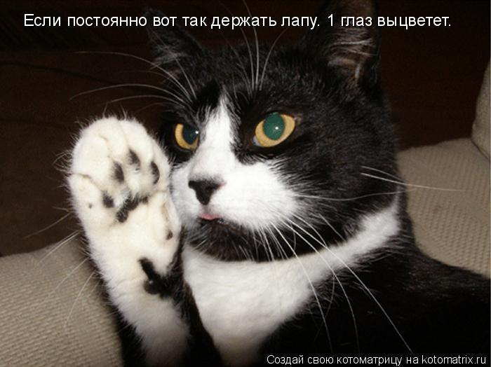 Котоматрица: Если постоянно вот так держать лапу. 1 глаз выцветет.