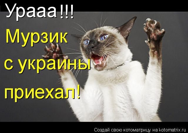 Котоматрица: Урааа !!! Мурзик с украины приехал!