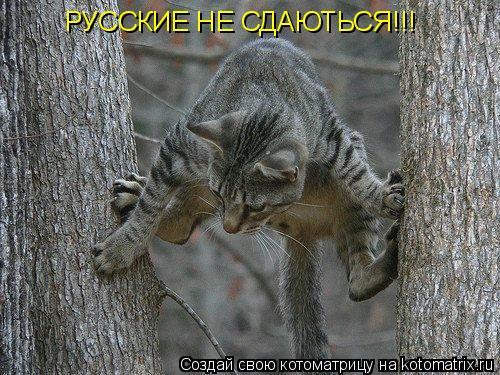 Котоматрица: РУССКИЕ НЕ СДАЮТЬСЯ!!!