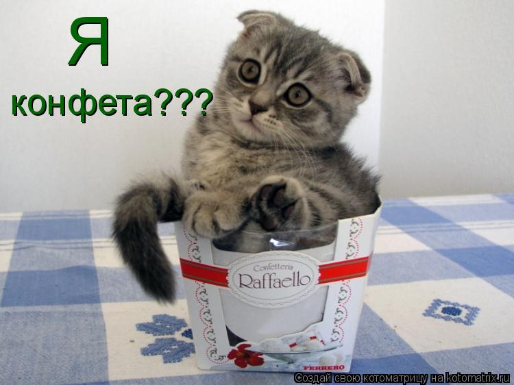Котоматрица: Я конфета???