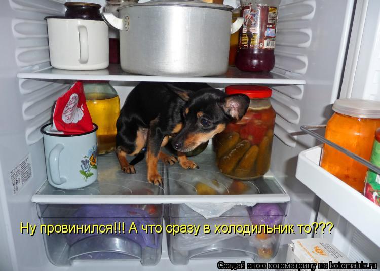 Котоматрица: Ну провинился!!! А что сразу в холодильник то???