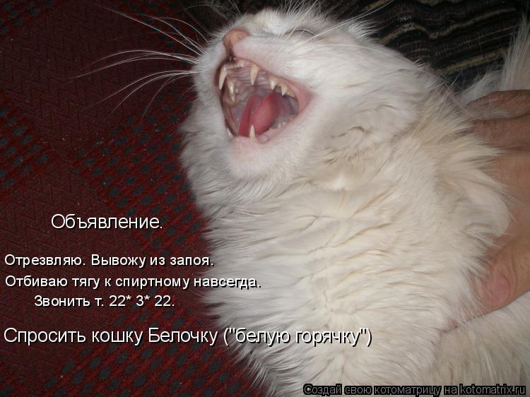 """Котоматрица: Отрезвляю. Вывожу из запоя. Отбиваю тягу к спиртному навсегда. Звонить т. 22* 3* 22. Спросить кошку Белочку (""""белую горячку"""") Объявление."""