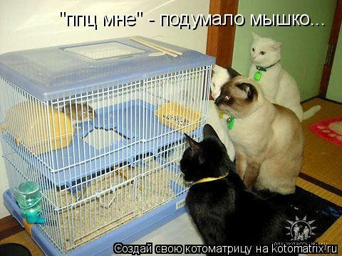 "Котоматрица: ""ппц мне"" - подумало мышко..."