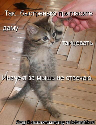 Котоматрица: Так...быстренько пригласите даму танцевать Иначе я за мышь не отвечаю.