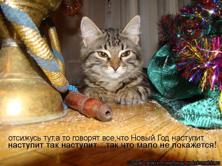 Котоматрица: отсижусь тут,а то говорят все,что Новый Год наступит наступит так наступит....так что мало не покажется!