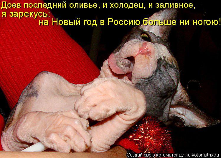 Котоматрица: Доев последний оливье, и холодец, и заливное, я зарекусь: на Новый год в Россию больше ни ногою!