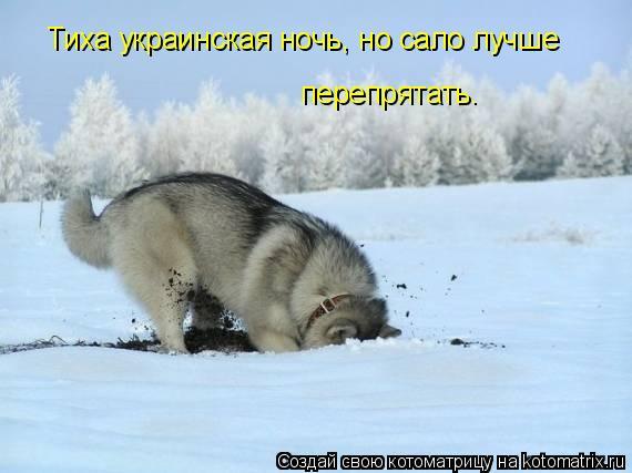 Котоматрица: Тиха украинская ночь, но сало лучше  перепрятать.