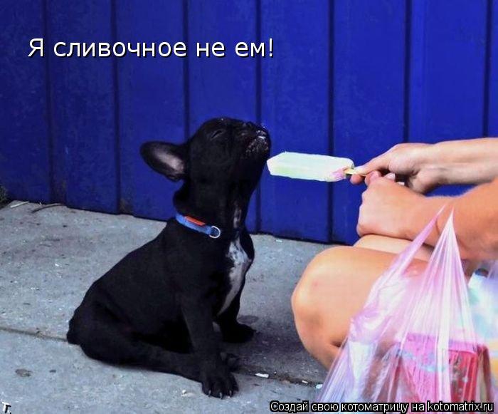 Котоматрица: Я сливочное не ем!
