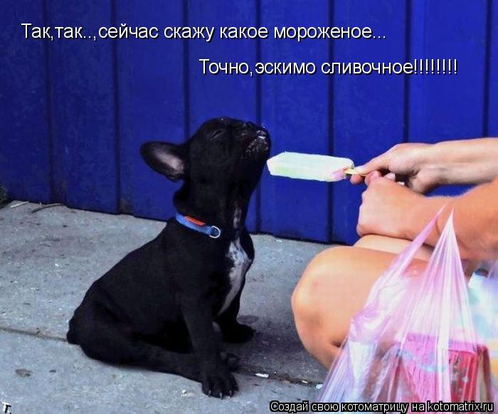Котоматрица: Так,так..,сейчас скажу какое мороженое... Точно,эскимо сливочное!!!!!!!!