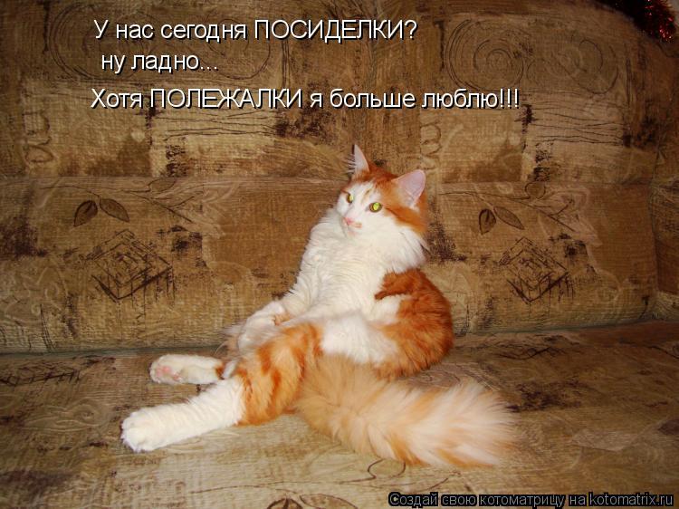 Котоматрица: У нас сегодня ПОСИДЕЛКИ? ну ладно... Хотя ПОЛЕЖАЛКИ я больше люблю!!!