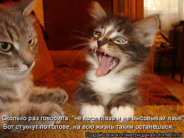 """Котоматрица: Сколько раз говорила: """"не коси глаза и не высовывай язык""""! Вот стукнут по голове, на всю жизнь таким останешься."""