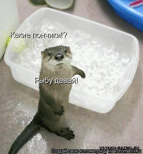 Котоматрица: Какие пончики!? Рыбу давай!
