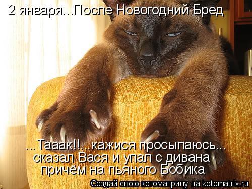 Котоматрица: 2 января...После Новогодний Бред ...Тааак!!...кажися просыпаюсь... сказал Вася и упал с дивана причём на пьяного Бобика
